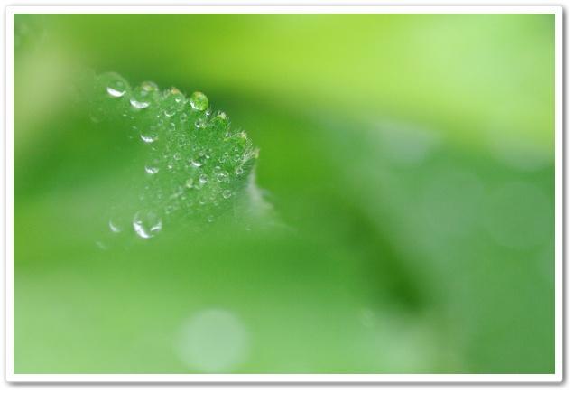drops4.jpg